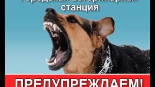 """БУОО """"Орловская городская станция по борьбе с болезнями животных"""""""