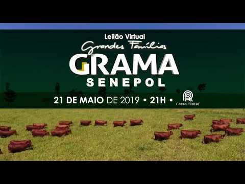 Leilão Virtual Grandes Famílias Grama Senepol 2019 apresenta