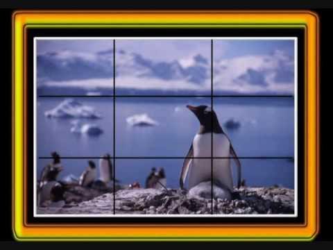 Taking photographs in Antarctica