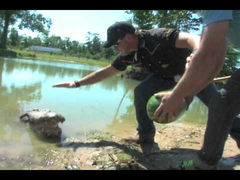 Amazing stunts with the largest alligator in Texas
