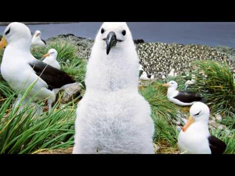 The Falkland Islands, Islas Malvinas, archipelago in the South Atlantic Ocean ,Patagonian Shelf.