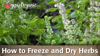 How to Freeze and Dry Herbs