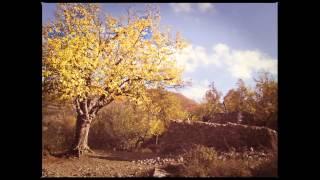 STAND HIGH PATROL - The Big Tree // JPATTERSSON trumpet edit