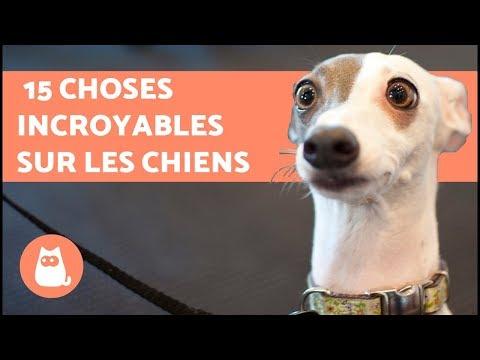 15 choses incroyables à connaître sur les chiens !