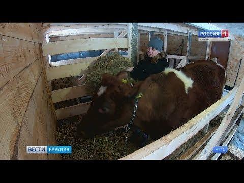 Корова за счёт республиканского бюджета