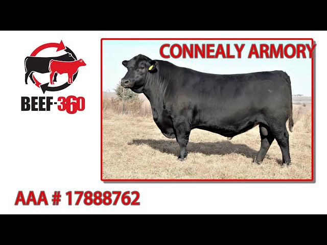 Beef 360 - CONNEALY ARMORY