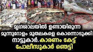 മൃഗശാലയിലെ മുന്നൂറോളം മുതലകളെ കൊന്നൊടുക്കിയതിന്റെ കാരണം ഞെട്ടിക്കും | malayalam news latest !