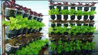 Download lagu Tái chế hàng loạt chai nhựa trồng xà lách xanh và tím | Recycle plastic bottles to grow purple salad