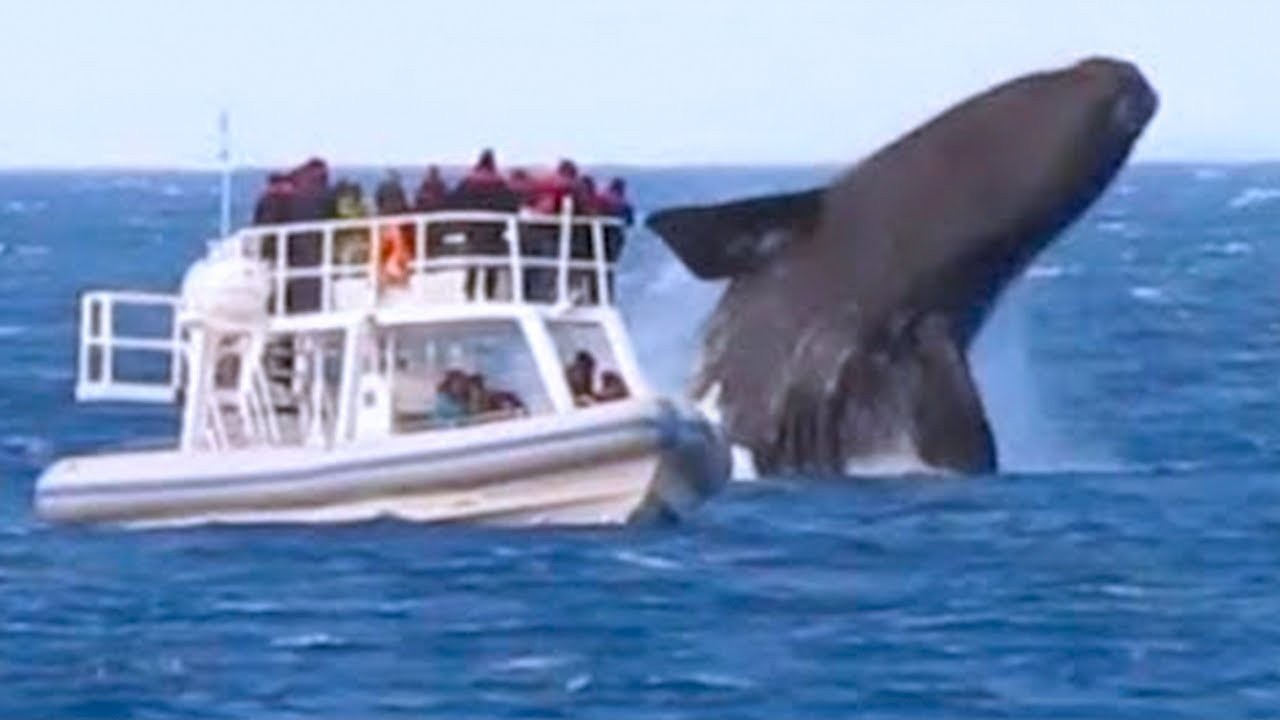 15 Incredible Encounters of Wild Animals Invading People's Boat