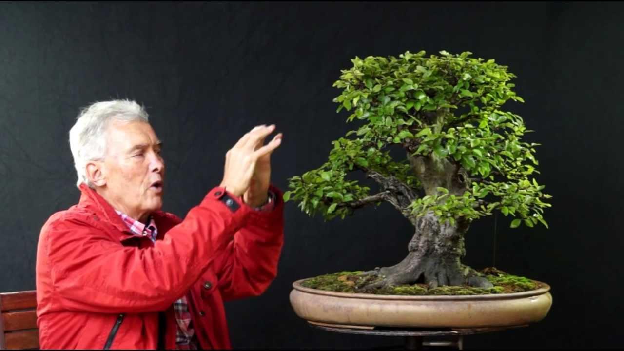 International Bonsai Academy With Walter Pall 2013 Case Study 1 Killer Nebari Youtube