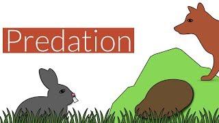 Predation- Brief Summary