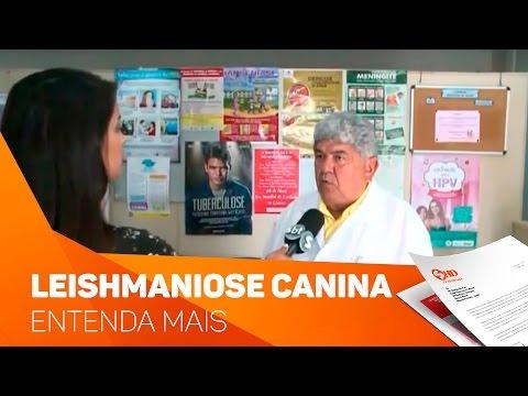 Possíveis casos de Leishmaniose canina em Votorantim - TV SOROCABA/SBT