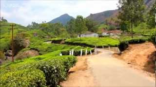 Big India Trip. Kerala,Munnar. Tea plantations