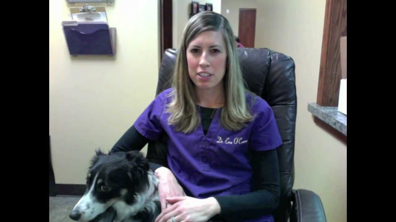 Animal Chiropractic for Sudden Rear Leg Paralysis or Paraparesis
