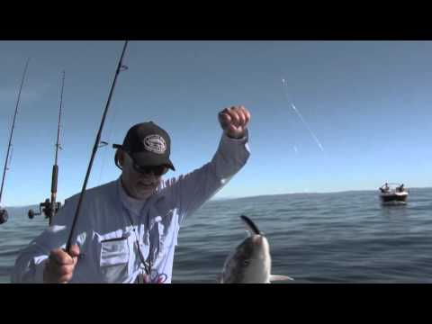 Boat Fishing For Kingfish - HOT ACTION!