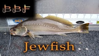 Botany Bay Big Jewfish, Flathead and Bonito