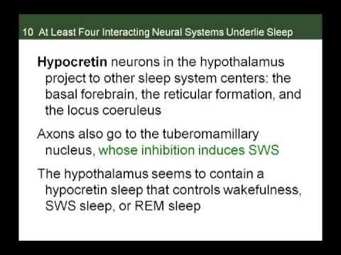 Neurobiology of Sleep II