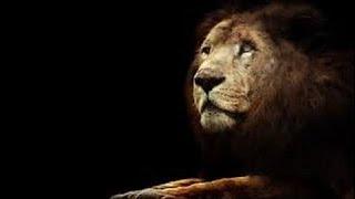 Ночь льва .  Классный фильм. National Geographic,  Документальный фильм  05.01.2017