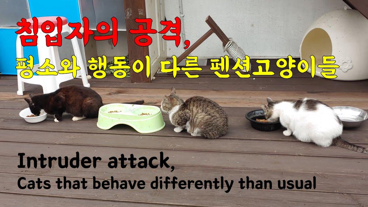 무언가에 공격을 받아 큰 상처가 나고 고양이들 분위기가 심상치 않다