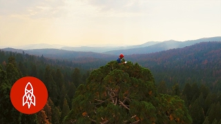 Stress Testing Giant Sequoias | That's Amazing