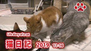 2019.11.16 みゃうの猫日記 【Miaou みゃう】