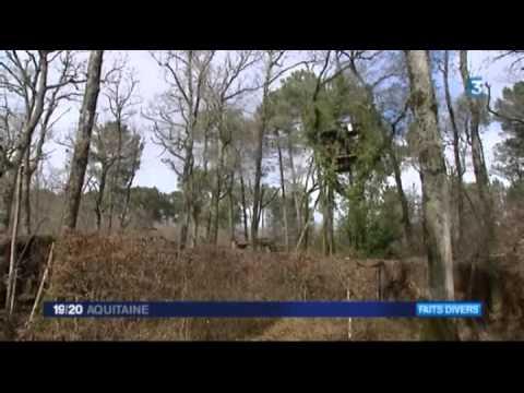Deux Palombières Saccagées En Sud Gironde