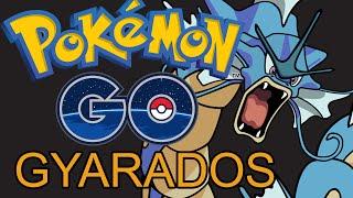 Pokemon Go Evolving Magikarp Into Gyarados - FIRST IN CANADA? Gyarados Farm OVER!