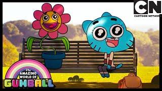 The Flower | Gumball | Cartoon Network