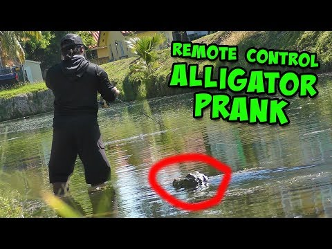 Remote Control ALLIGATOR PRANK Scares Fisherman!!!