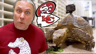 reptiles-predict-kansas-city-35-0-super-bowl-victory-brian-barczyk