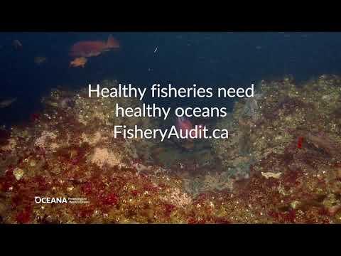 Healthy Fisheries Need Healthy Oceans