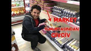Market Yumurtasından Civciv Çıktı