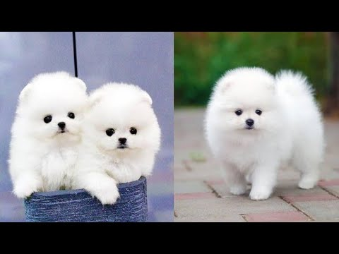 Baby Dogs – Cute and Funny Dog Videos Compilation #2