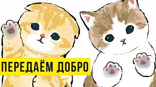 Приложи палец к экрану) Приколы с котами | Мемозг #400 видео