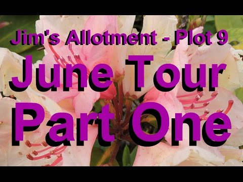 Jim's Allotment - Plot 9 - June Tour Part 1 - Lentils, Sweet Potatoes and Nicandra