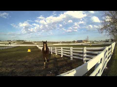 Kentucky Horse Park - Meet a few of the gentle giants!