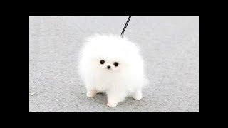 Забавные щенки - Подборка видео с милыми и забавными щенками. [HD] 2018