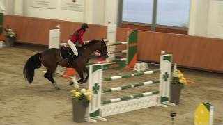 Clarimo x Linton 2012 stallion jumping horses for sale +36709487770 szuhaifarm@gmail.com