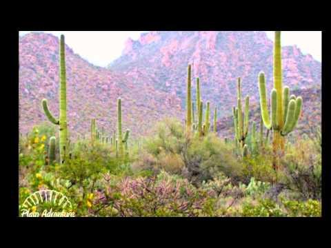 Saguaro National Park travel guides Arizona, United States