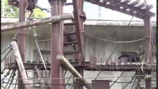 ちびっこチンパンジー リキの大冒険 2012年10月 東山動物園