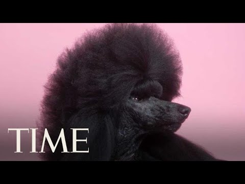 Westminster's Best In Show: Meet Siba The Standard Poodle | TIME