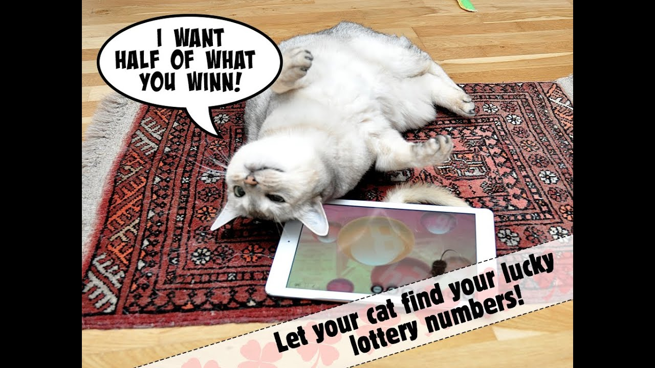 lucky cat lottery numbers game for cats youtube