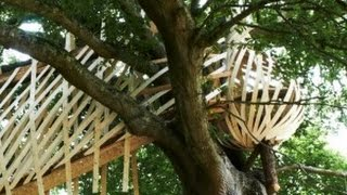 Dramatic Dartmoor Treehouse is Woven From Wood Like a Bird's Nest
