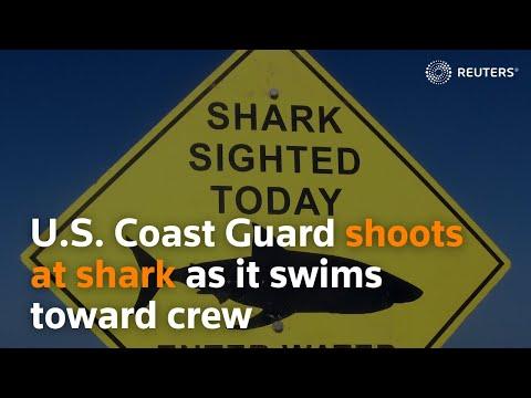 Download U.S. Coast Guard shoots at shark as it swims toward crew