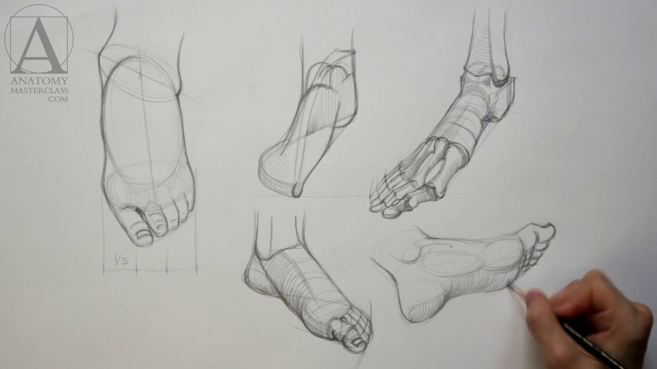 Foot Anatomy - Anatomy Lesson for Artists - YouTube