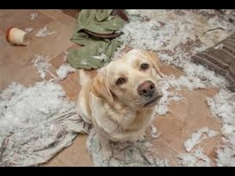 Funny Guilty Dogs Compilation (2014)