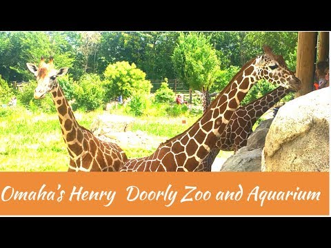 Omaha's Henry Doorly Zoo and Aquarium | Best Zoo we have seen