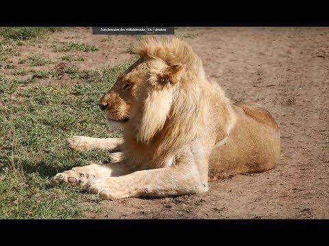 Tanzania Safari 2017 HD