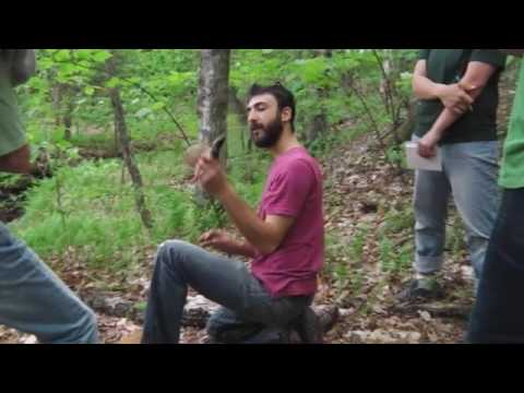 Shiitake Log Cultivation - Growing Mushrooms