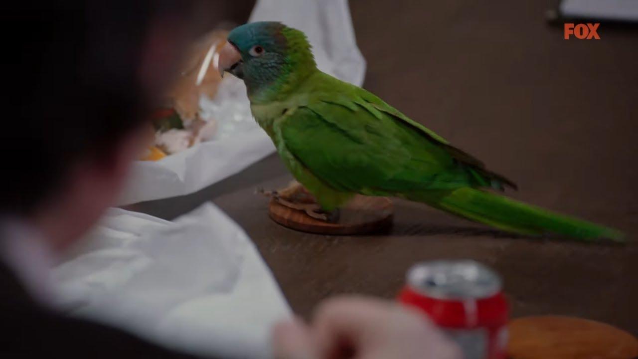Lekarz postawił diagnozę jego papudze! [Chicago Med]